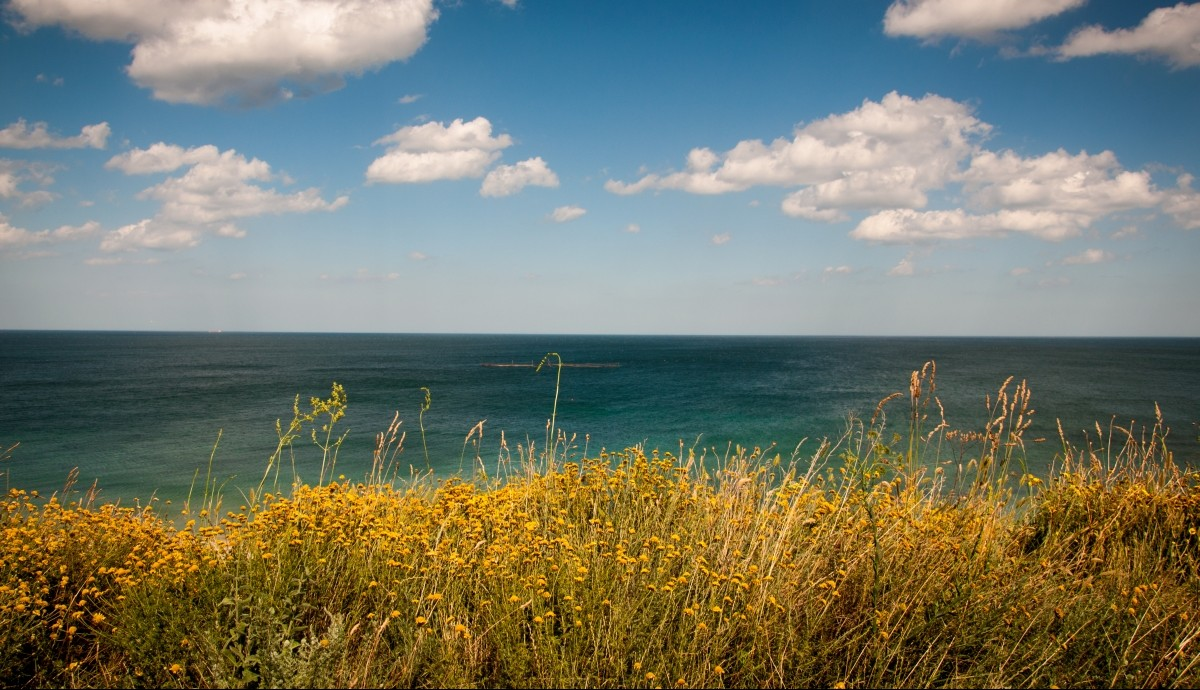 Optimized-wildflowers in front of ocean
