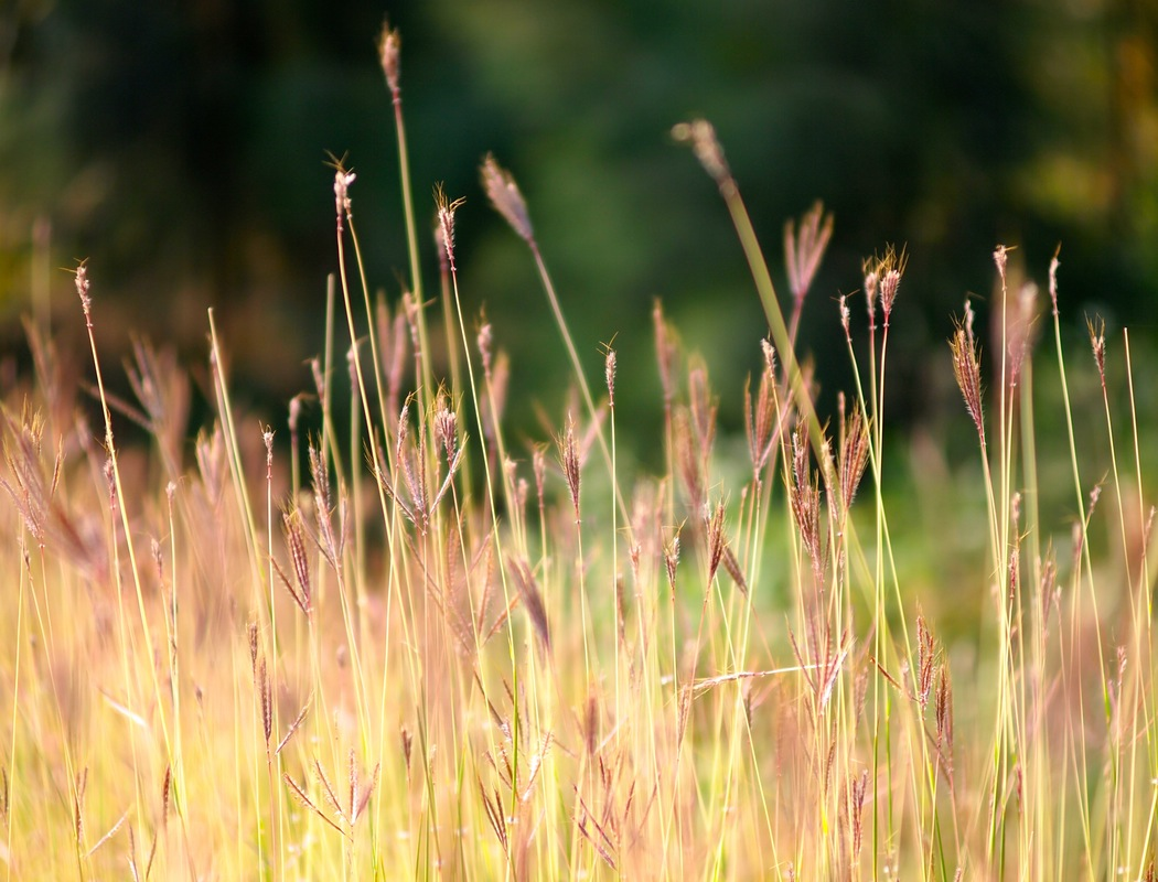 grass strands and sunshine